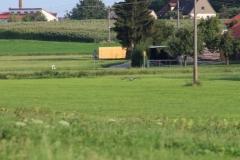 storchenfamilie_untermichelbach_28-08-2019_038-1024x683