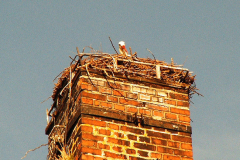 storch_29-03-06_002-1