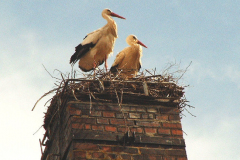 storch_29-03-06_003