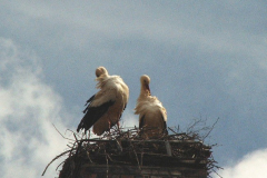 storch_29-03-06_006