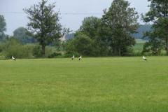 storchenfamilie-02-07-11_002