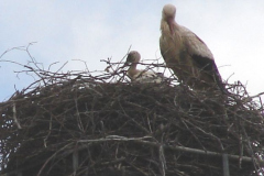 40_storch_02-06-06