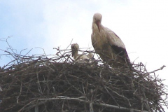 41_storch_02-06-06