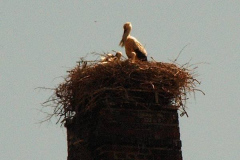 familie_storch_2005_01