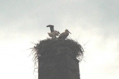 familie_storch_2005_02