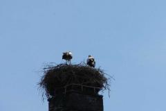 storchenberingung-03-05-2013_001