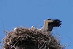 118_storch_03-07-06