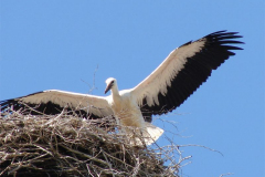 119_storch_03-07-06