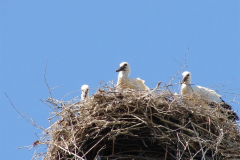 120_storch_03-07-06