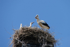 121_storch_03-07-06