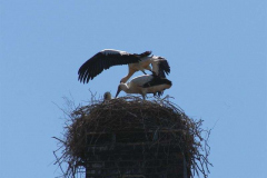 122_storch_03-07-06