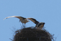 123_storch_03-07-06
