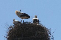 124_storch_03-07-06