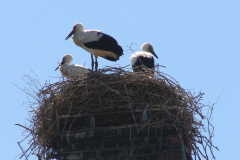 125_storch_03-07-06