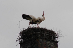 storch_004