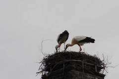 storch_005
