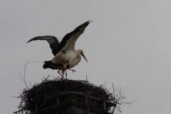 storch_006