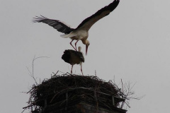 storch_007
