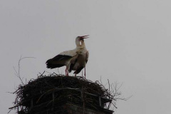 storch_008