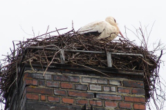 storch_013