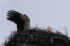 storch_014