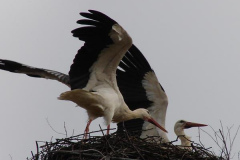 storch_018