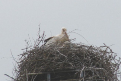 45_storch_06-06-06