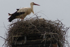 47_storch_06-06-06