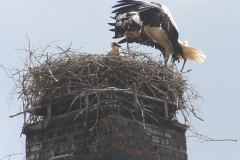 50_storch_07-06-06
