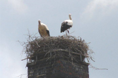 51_storch_07-06-06