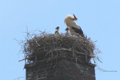 53_storch_07-06-06