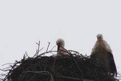 stoerche-06-03-09_003_th-1