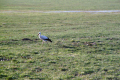 storch_06-04-06_002