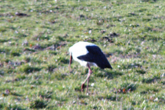 storch_06-04-06_005