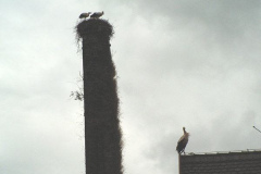 familie_storch_2005_01-1
