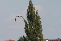 storcheneltern-08-08-14_007