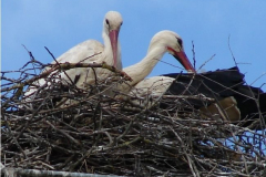 storch_02-05-06_001