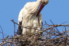storch_02-05-06_002