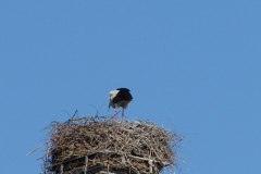storch_09-05_001
