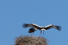 storch_09-05_002