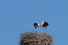storch_09-05_003