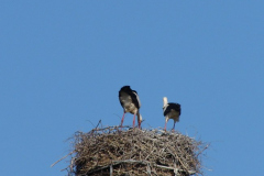 storch_09-05_005