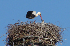 storch_09-05_007