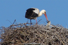 storch_09-05_008