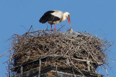 storch_09-05_009