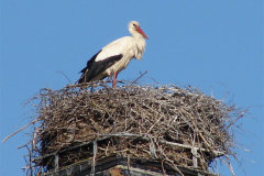 storch_09-05_010