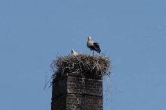 60_storch_09-06-06