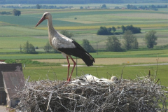 66_storch_09-06-06