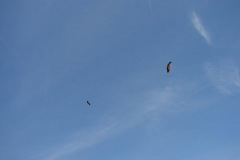 76_storch_09-06-06