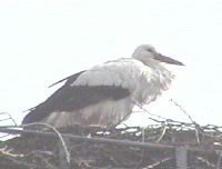 storch2004_1